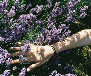 flowers, tumblr, and hand image