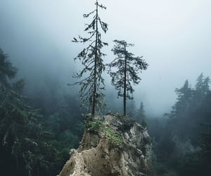 coolness, foggy, and forest image