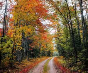 autumn, nature, and instagram image