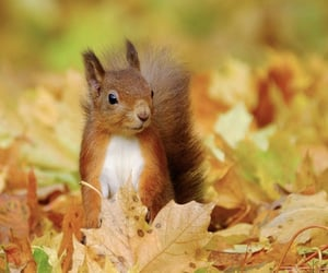 autumn, leaves, and squirrel image