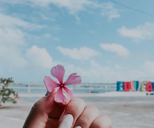 autoral, flowers, and ocean image