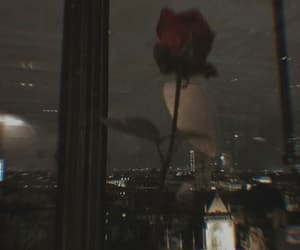 rose, red, and city image