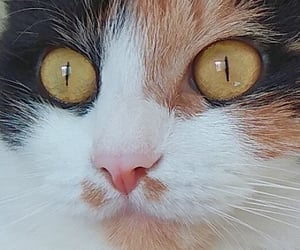 adorable, cats, and eyes image
