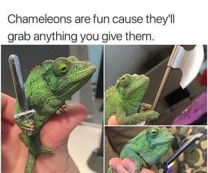 chameleon, funny, and meme image