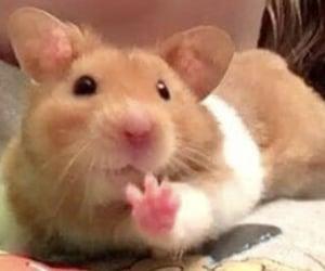 animal, hamster, and kawaii image