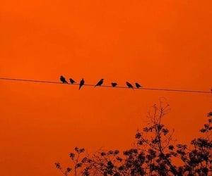 orange, aesthetic, and bird image
