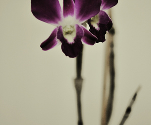 dark, flowers, and orchid image