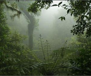 aesthetic, rainforest, and tropics image
