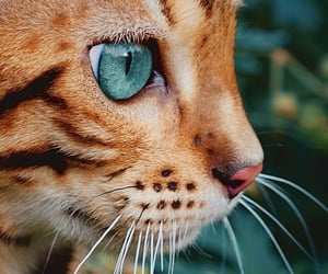 cat, animal, and beautiful image