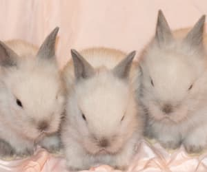 bunnies, bunny, and fluffy image