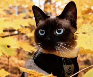 animal, autumn, and blue eyes image
