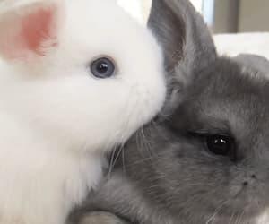 baby bunny, bunny, and gif image