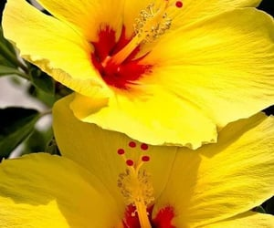 colores, flores, and spring image