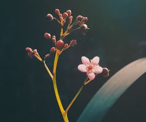 flower, photography, and macro image