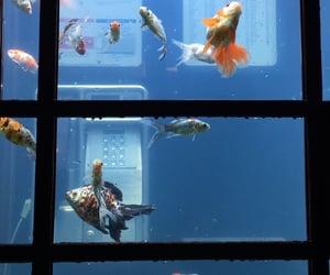 aesthetic, aquarium, and nature image
