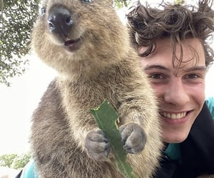 shawn mendes, shawnmendes, and quokka image