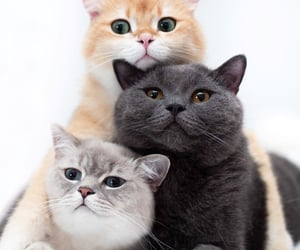 cat, cats, and featured image