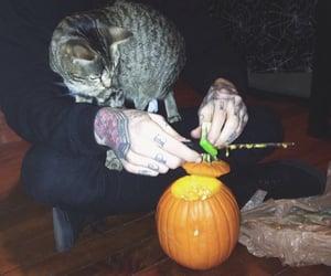 autumn, cat, and Dexter image