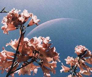 flowers, pink, and connor franta image