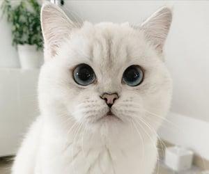 animals, cat, and cute cat image