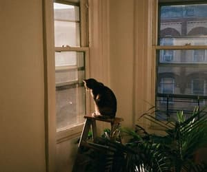 autumn, cat cats, and cozy image