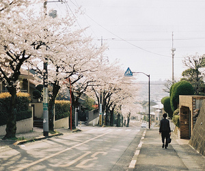 japan, street, and japanese image