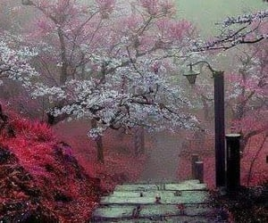 nature, flowers, and japan image