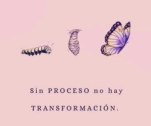 butterfly, transformation, and proceso image