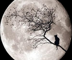 cat, Halloween, and moon image