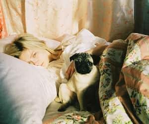 pug, bed, and dog image