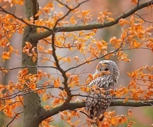 autumn, leaves, and owl image