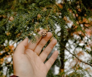 autumn, hand, and pine cones image