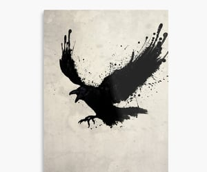 dark, raven, and photographic image