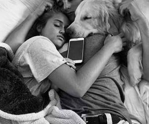 dog, sleep, and love image