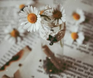 book pages, daisies, and Portrait photography image