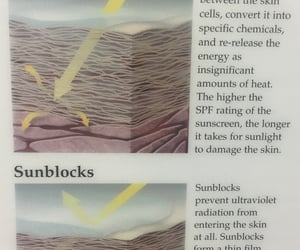 sunscreen, facts, and sunblock image