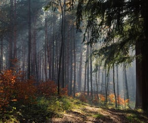 autumn, forest, and light image