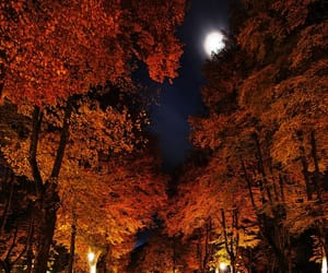 autumn, moon, and nature image