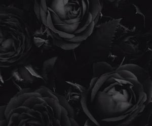 black, roses, and dark image