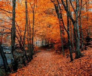 fall, autumn, and foliage image