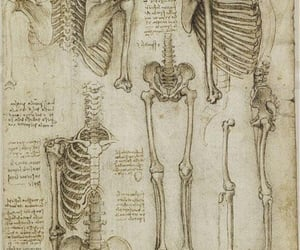 bones, skeleton, and black and white image