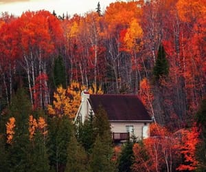 autumn, autumnal, and beauty image