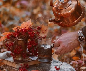 autumn, autumnal, and berries image