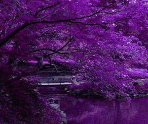 blossoms, landscapes, and purple image