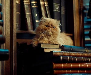 cat, gif, and book image