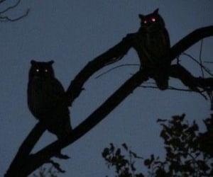 owl, night, and dark image