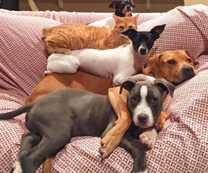 dogs, animals, and cat image