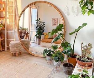 home, plants, and mirror image