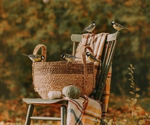 animals, basket, and birds image