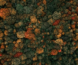 aerial, autumn, and colors image